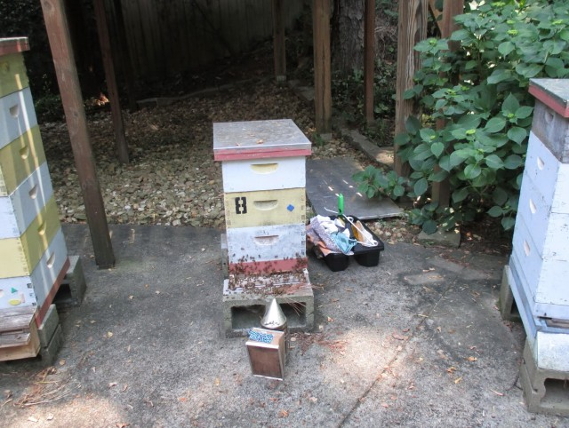 Bees On The Porch Video
