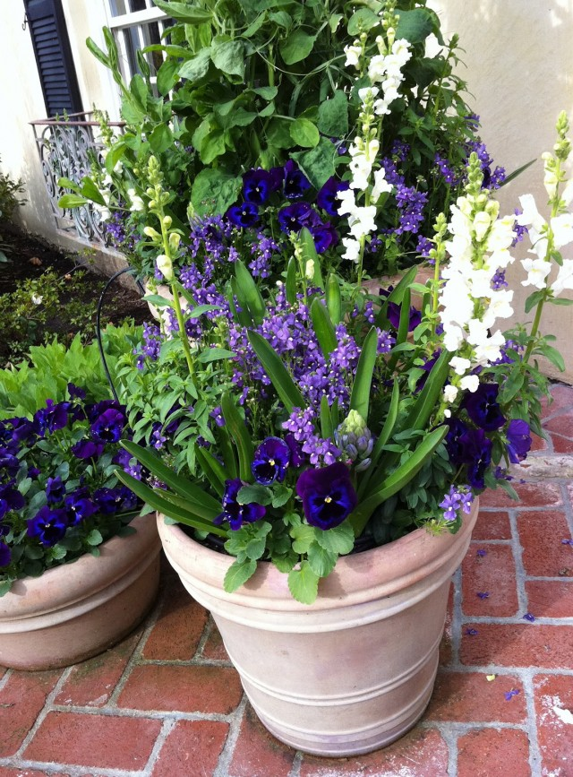 Winter Plants For Front Porch